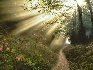 bright-light-path